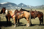 dude ranch horses and mountain backdrop
